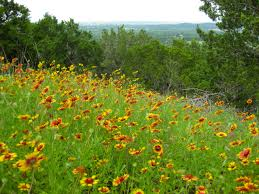 plants native to oklahoma native plants eco landscaping