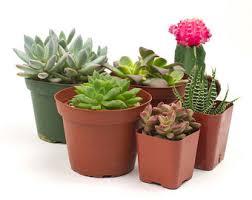 cactus terrarium etsy