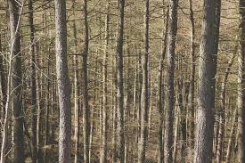 free photo forest wood trees trunks bare free image on