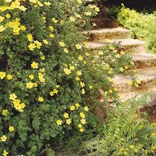 85 best great shrubs for zone 5 6 images on shrubs