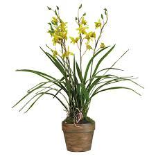 cymbidium orchid potted faux cymbidium orchid yellow oka