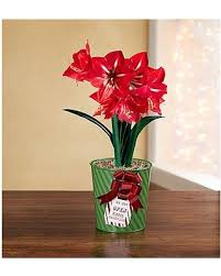 plant of the month club winter shopping season is upon us get this deal on plant of the