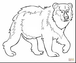 astounding brown bear coloring brown bear coloring pages