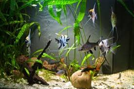 how to clean algae from a fish tank