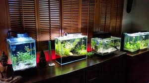 home aquarium exclusive aquariums for home aquariums whether large or small can