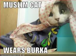 Burka Meme - muslim cat wears burka cheezburger funny memes funny pictures
