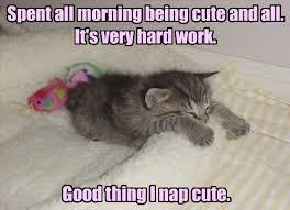 Cute Kitty Memes - when i wake up cute i m gonna wanna eat cute lolcats lol