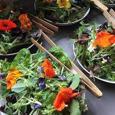 trill farm salad trill farm garden
