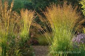 ornamental grasses for the modern garden knoll gardens