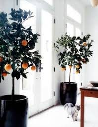48 best bespoke artificial trees images on bespoke