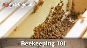 beekeeping for beginners hive set up youtube