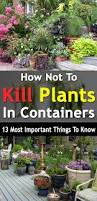 how not to kill plants in containers 13 most important things to