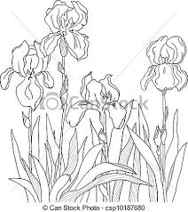 iris the sketch from a four flowers vector search clip art