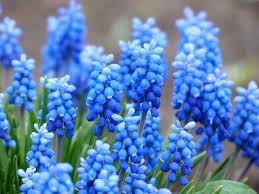 colorful flowers for your garden backyard garden lover