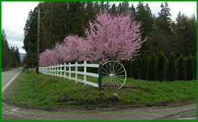 nurserytrees home page