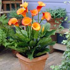 Flowering Patio Plants Patio Plants For Container Gardens High Country Gardens