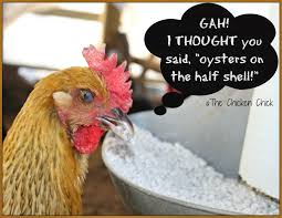 the chicken for strong eggshells size matters