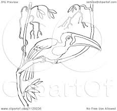 cartoon clipart of an outlined wild toucan in a tree black and