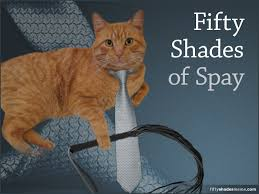 50 Shades Of Gray Meme - fifty shades of spay meme