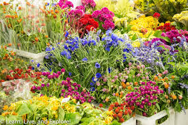 Flower Wholesale A Day Of Flowers From The Wholesaler To A Gorgeous Arrangement