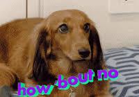 Frowning Dog Meme - inspirational frowning dog meme kayak wallpaper