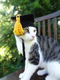 dog graduation cap and gown graduation pet hat costume graduation cap for by iheartneedlework