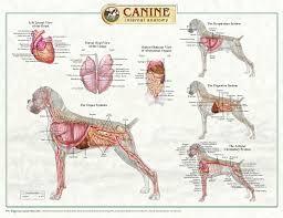Hymen Female Anatomy External Anatomy Female Anatomy Chart Body