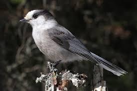 Minnesota birds images Minnesota birding by season fall bird watcher 39 s digest jpg