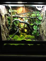 exo terra setup chameleon forums any arboreal critter with