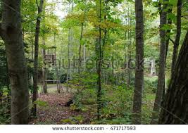 tree stand stock images royalty free images vectors