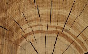 wood tree rings images Tree rings walldevil jpg