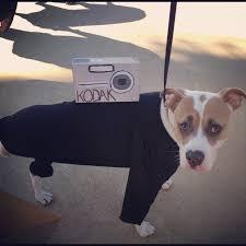 three legged dog halloween costume a tripod nifty ideas