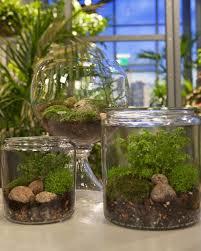 diy terrariums diy fairyland terrarium cotcozy