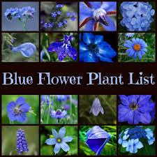 of blue flowers list