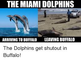Funny Miami Dolphins Memes - 25 best memes about miami dolphins meme miami dolphins memes