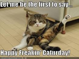 Caturday Meme - happy caturday animal capshunz funny animals animal captions