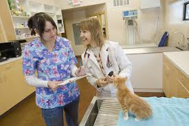 Resume Samples Veterinarian by Cover Letter Sample For Veterinary Technician Position