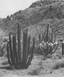 Seeking Cactus Cast Ecology Of The Saguaro Ii Table Of Contents