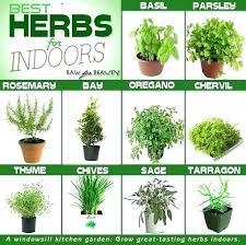 growing herbs indoors under lights light for growing herbs indoors image titled grow herbs indoors