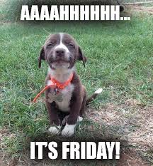Friday Funny Meme - aaaahhhh it s friday funny dog meme desktop backgrounds