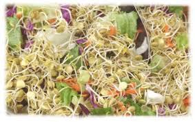 cuisine crue et vivante alimentation vivante graines germées alimentation vitalité