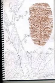 stone soup for five sketch and nature journaling botany grade 5