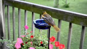 wild bird house hummingbirds u0026 orioles feeding on nectar and