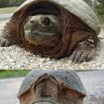 Tortoise Meme - bad pun tortoise meme generator imgflip