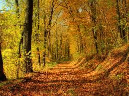 halloween scenery background fall scenery wallpapers free download pixelstalk net