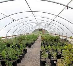 native desert plants landscaping archives desert rain house