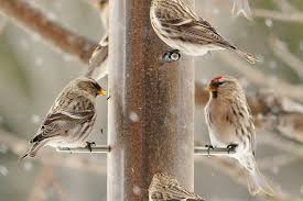 tips on how to attract birds in the winter