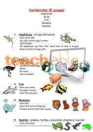 invertebrate and vertebrate features summary sheet age 7 11 ks