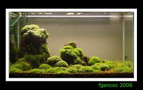 Java Moss Aquascape Volcanic Rocks With Java Page 5 Aquascaping Aquatic Plant