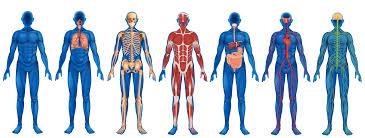 anatomy exam one study guide